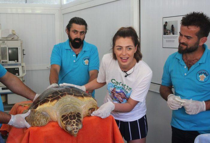Alisha Cowie, İztuzu'nda gönüllü ekibe yardım etti