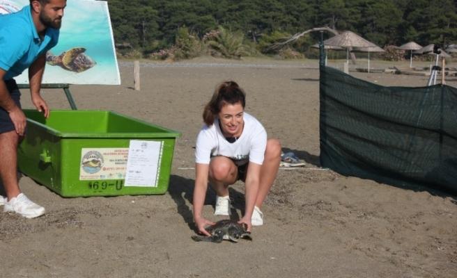 Alisha Cowie 'Dalyan İztuzu'nda yavru caretta carettayı denize bıraktı