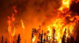 Bilim insanları ağaçların iklimi soğutma özelliklerini inceliyor