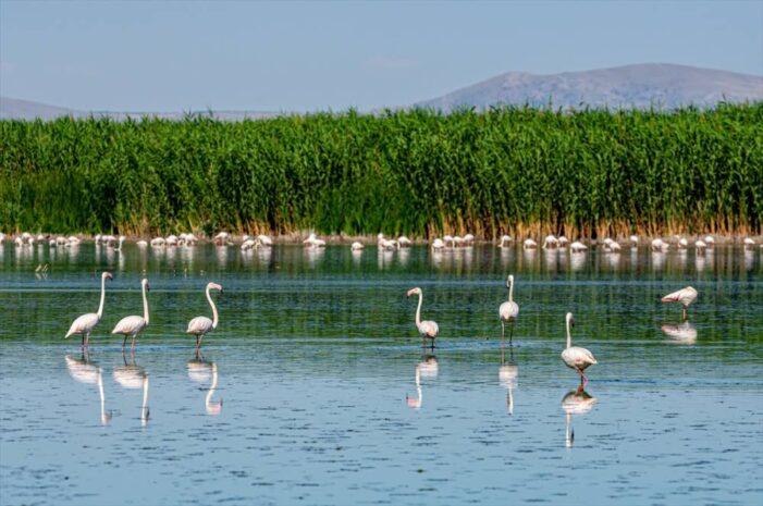 Anekder: Doğal Göllerimiz kurumasın!..