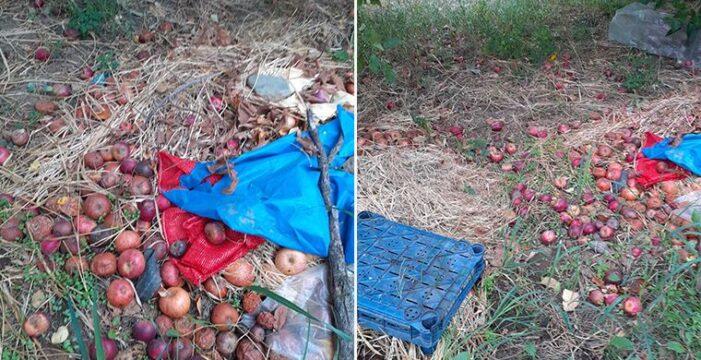 Çanakkaleli çiftçi: Evde yakacak odunum bile yok!..