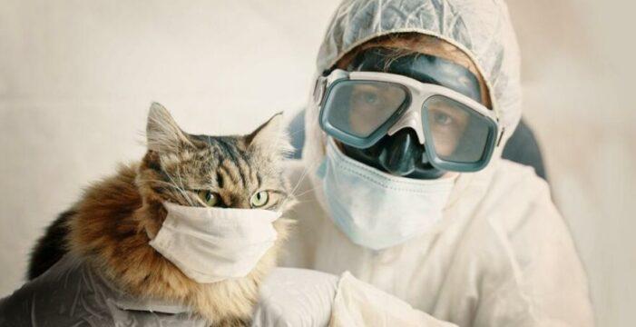 Kedinin corona testi pozitif çıktı!..