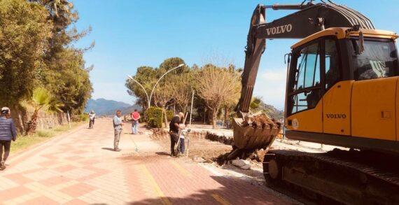 Marmaris'te ağaç katliamı