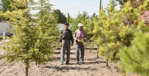 76 yaşındaki kardeşler mahallelerine 10 yılda binin üzerine ağaç dikti
