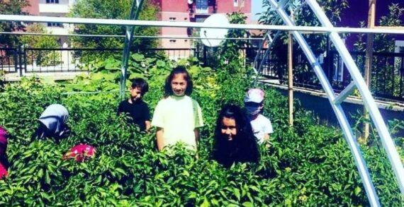 """İlkokul bahçesinde """"Yerli tohum tarım atölyesi"""" heyecanı!.."""